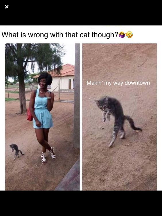 20 Of The Happiest Animals Memes That Will Keep You Laughing For Hours Funny Animal Jokes Animal Jokes Funny Cat Memes