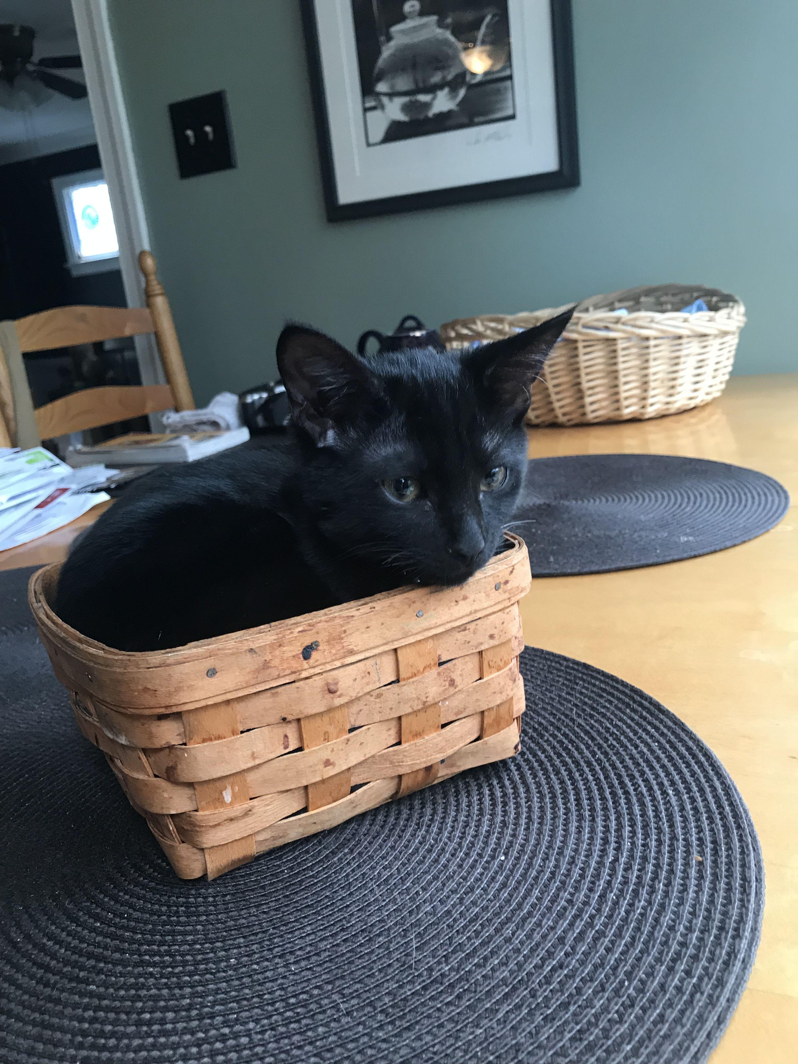 Looks Like Someone Went Berry Picking Black Kitten Black Cat Aesthetic Cats And Kittens