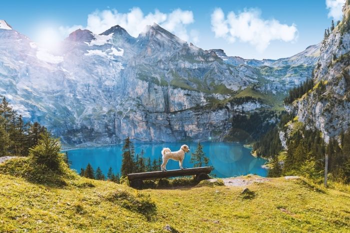 ▷ 1001 + photos pour un fond décran nature merveilleux