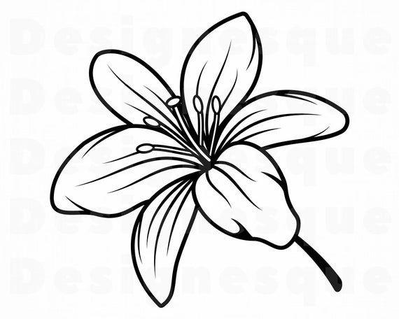 Lily Flower 2 Svg Lily Flower Svg Lily Svg Flower Svg Etsy In 2021 Lilies Drawing Flower Drawing Flower Svg