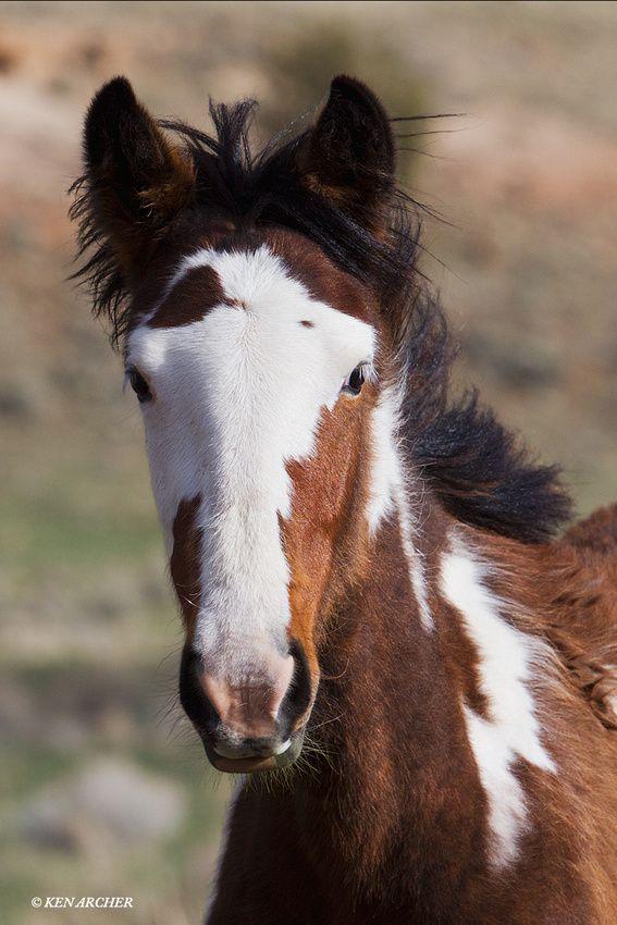 Wild Horse Colt - WDHS01215 - by Ken Archer