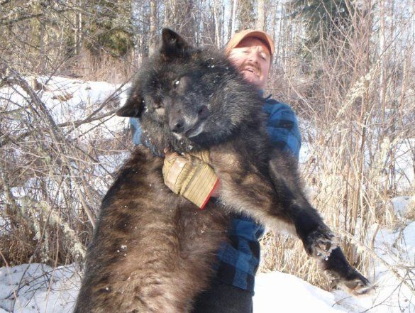 This Is An Idea Of Size Timberwolves Images Here S A Couple