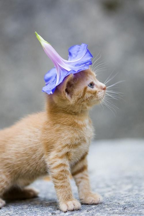 curiousity kitty with flower on the hat