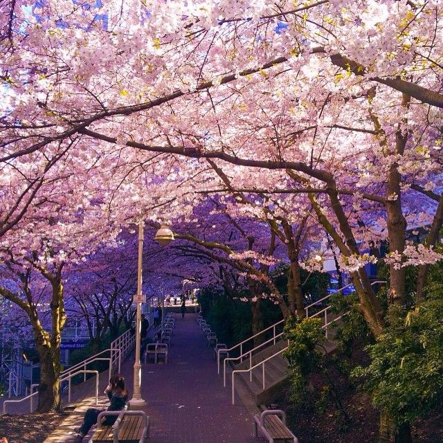 51 Vancouver Spots To Take Really Cool Instagram Pictures | Cherry blossoms, Vacation destinations and British columbia