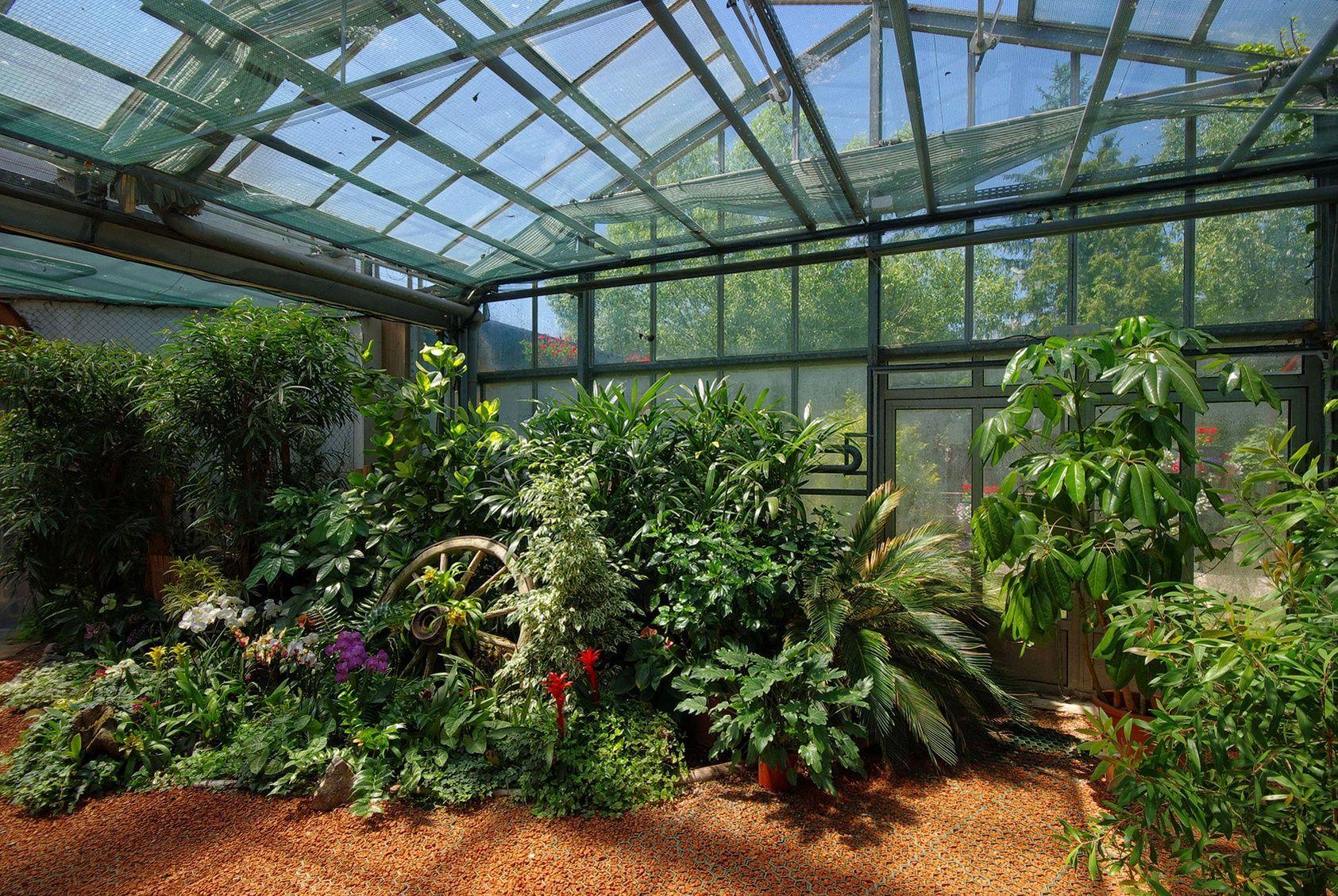 Comment cultiver des plantes tropicales sous une serre