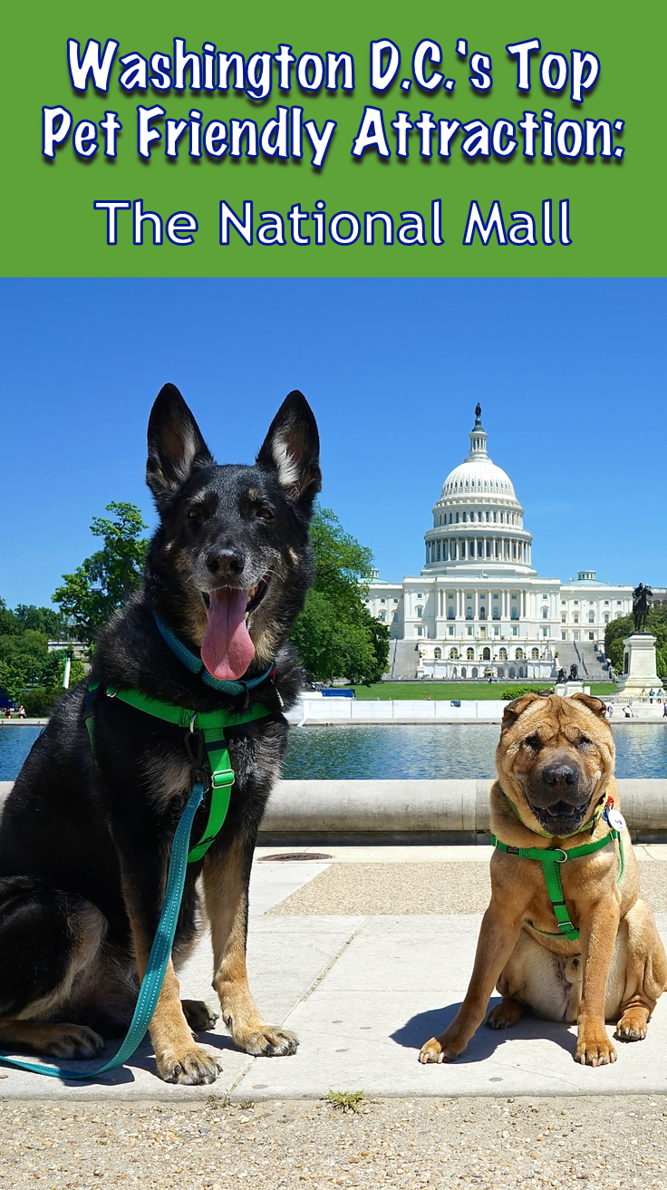 Washington D C S Top Pet Friendly Attraction The National Mall Dog Friendly Vacation Pet Friendly Road Trip With Dog