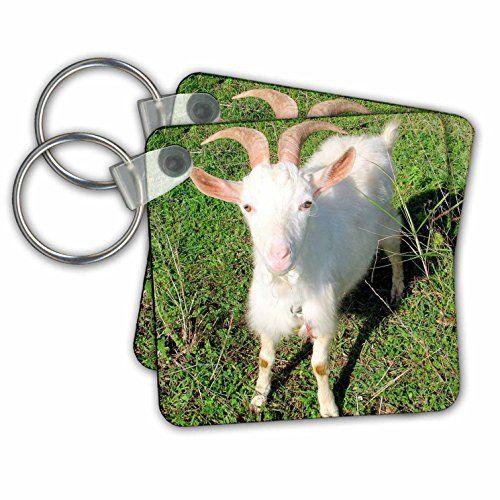 Taiche Photography - Farm Animals Goat - Key Chains - set... https://www.amazon.com/dp/B01LOVNMGW/ref=cm_sw_r_pi_dp_x_8aUdyb3BMHNMP