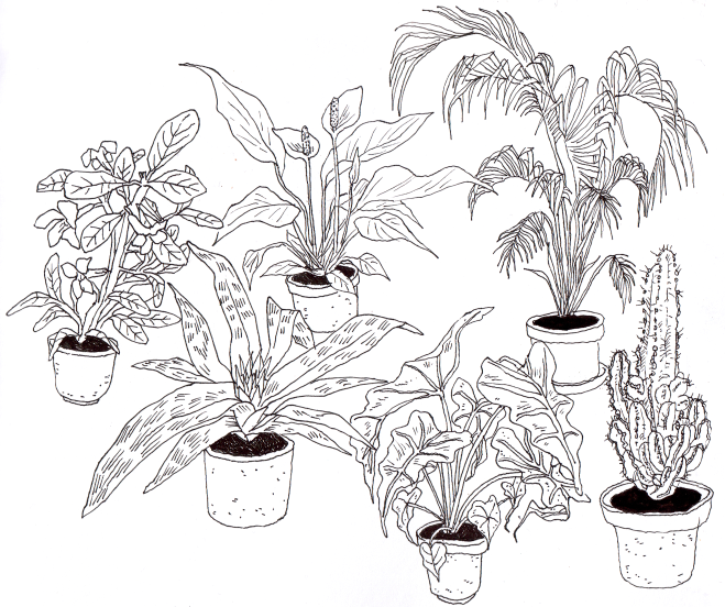 house plants drawing. emmiriikka vartiainen house plants drawing