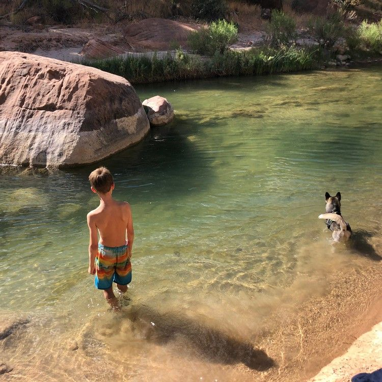 Puppy dies at Zion National Park in toxic algae bloom that