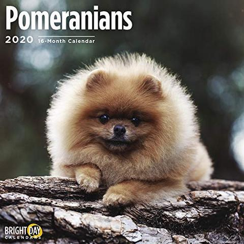 Pin By Daksh Veera On Dogs In 2020 Dog Calendar Dog Breeds Small Puppies