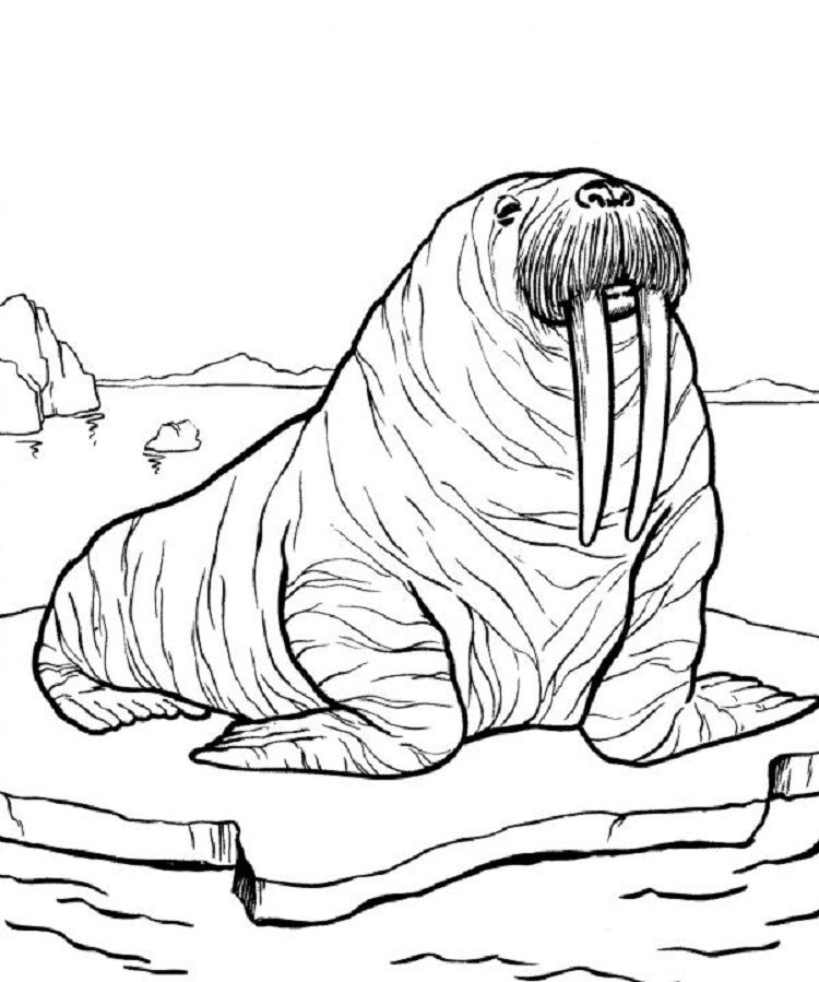 Pin By Marcia On Alaska Color Pages Zoo Animal Coloring Pages Zoo Coloring Pages Animal Coloring Pages