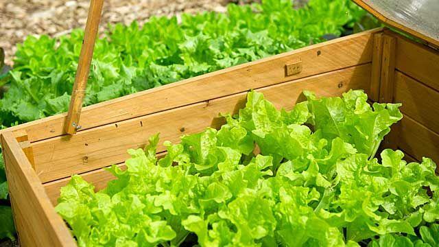 Warum Jetzt Schon Der Richtige Zeitpunkt Zum Pflanzen Ist Fruhbeet Gemuseanbau Und Gartenboden