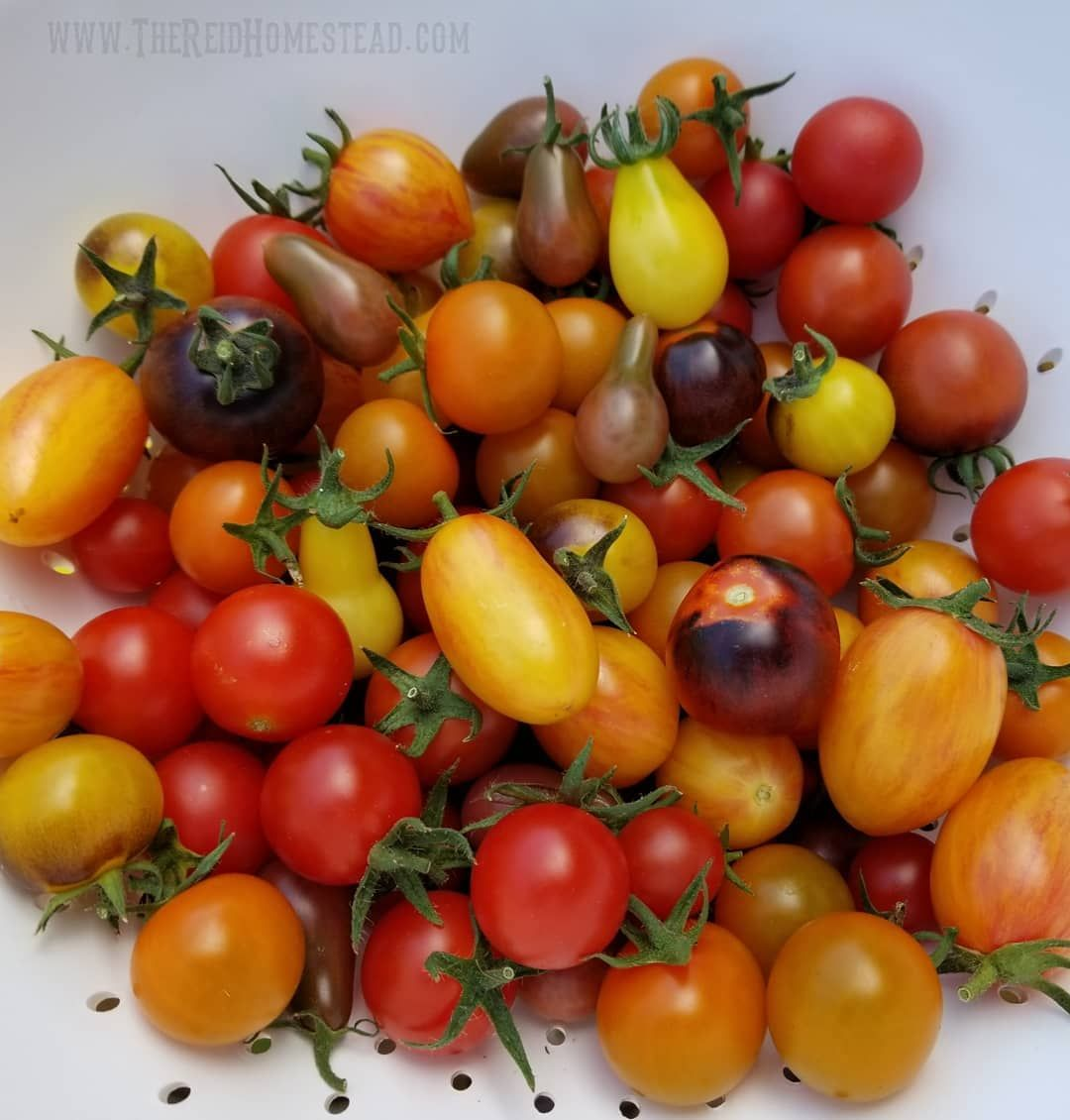 The cherry tomatoes are coming on strong now! Love the colors in this years varieties!
