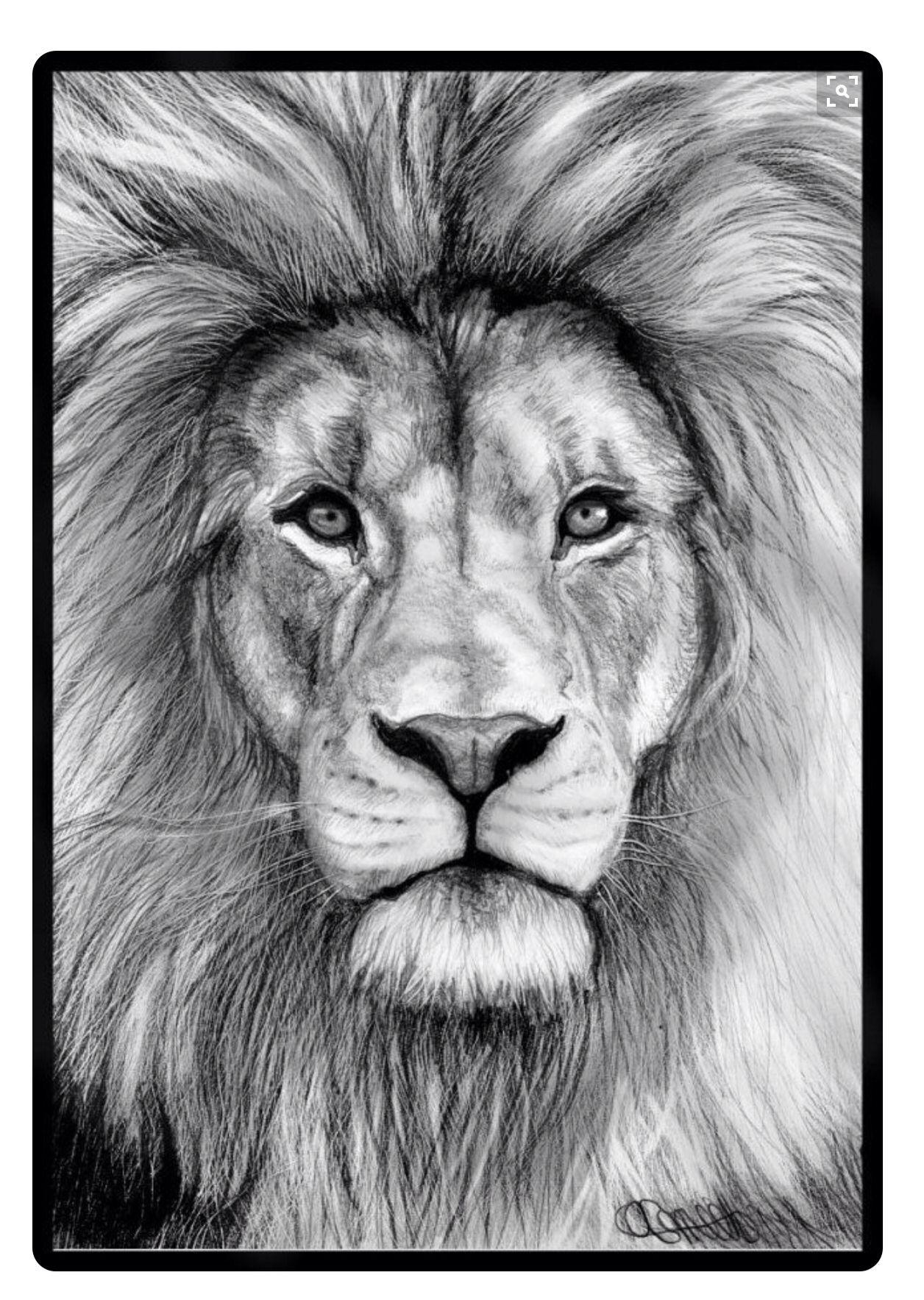 Pin De Joaquin Bordagorry En Jota Dibujos De Leones Animales