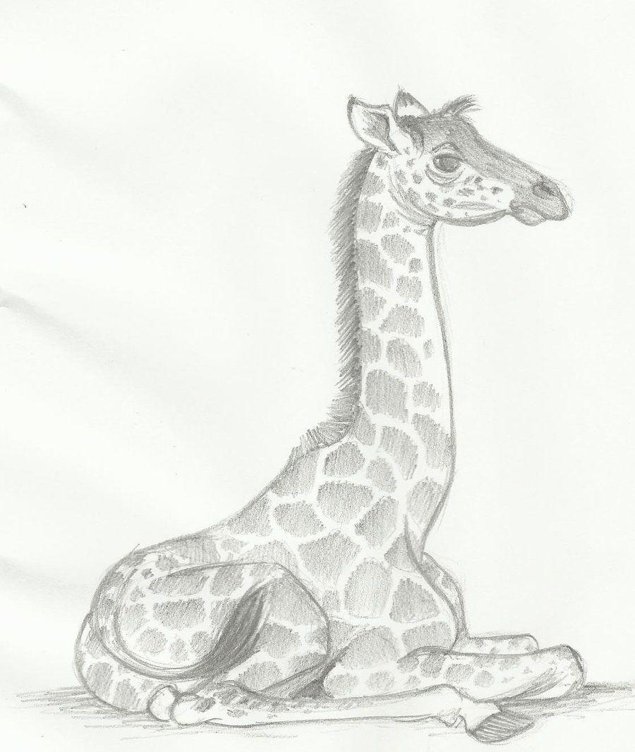 drawing giraffes   baby giraffe by huntergirl463 ...