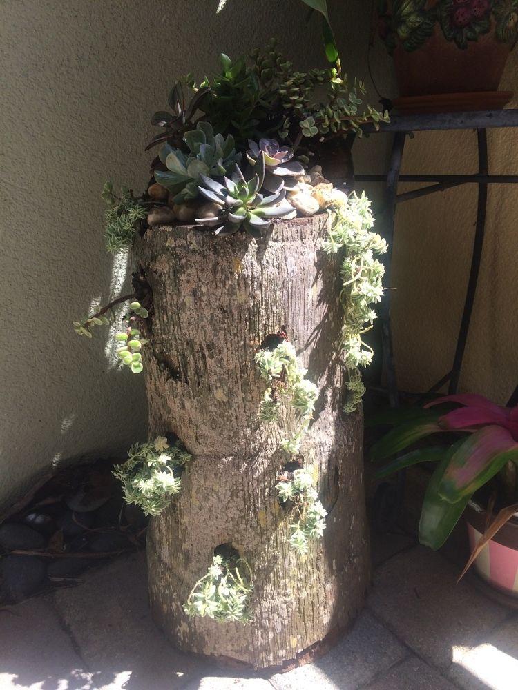Palm Tree Stumps Repurposed Palm Trees Garden Planting