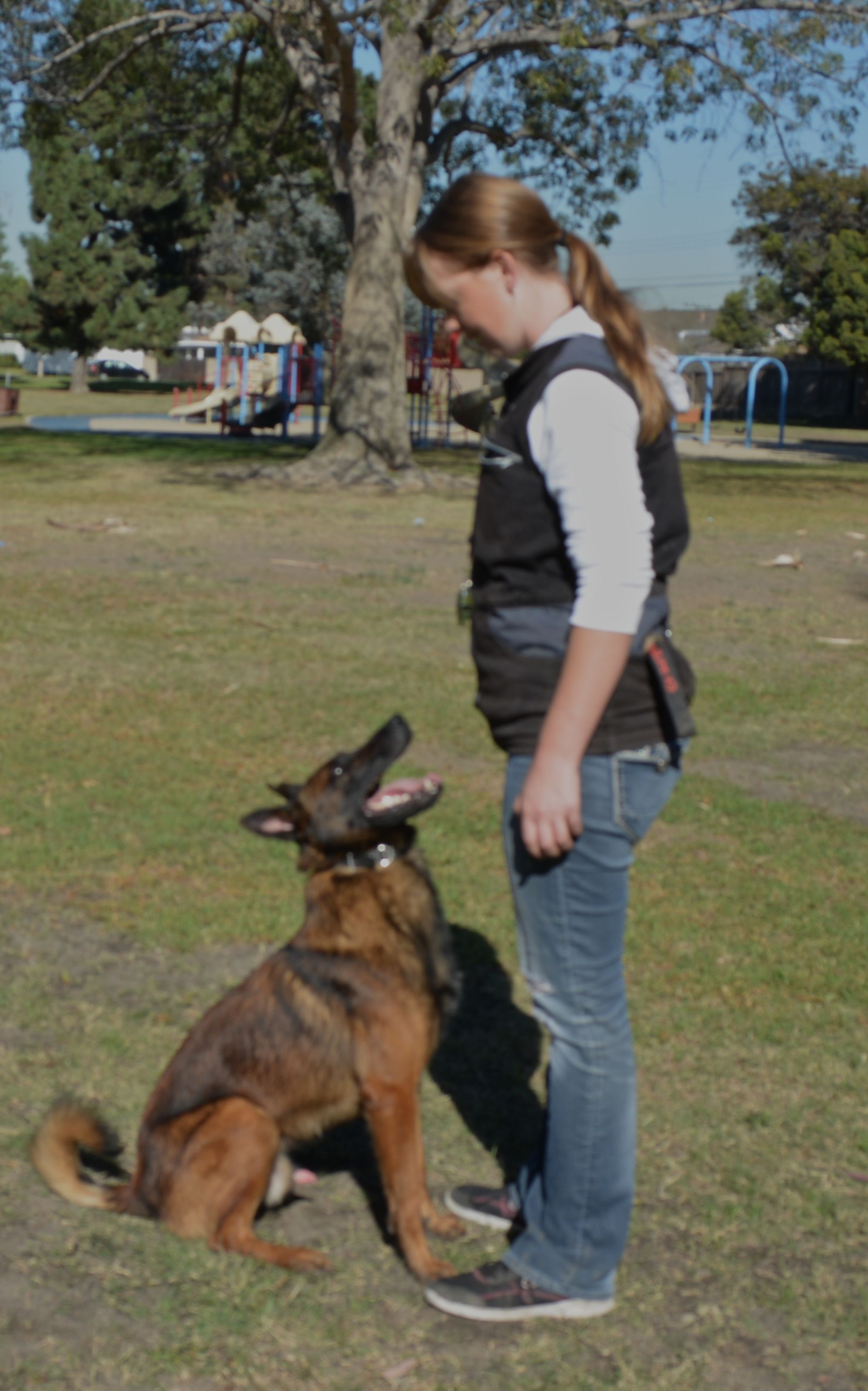 Vladae Dog Trainer Orange County You Can Get Additional