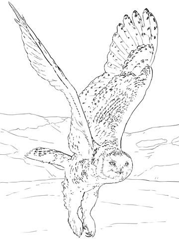 Snowy Owl Coloring Page From Owls Category Select From 20946