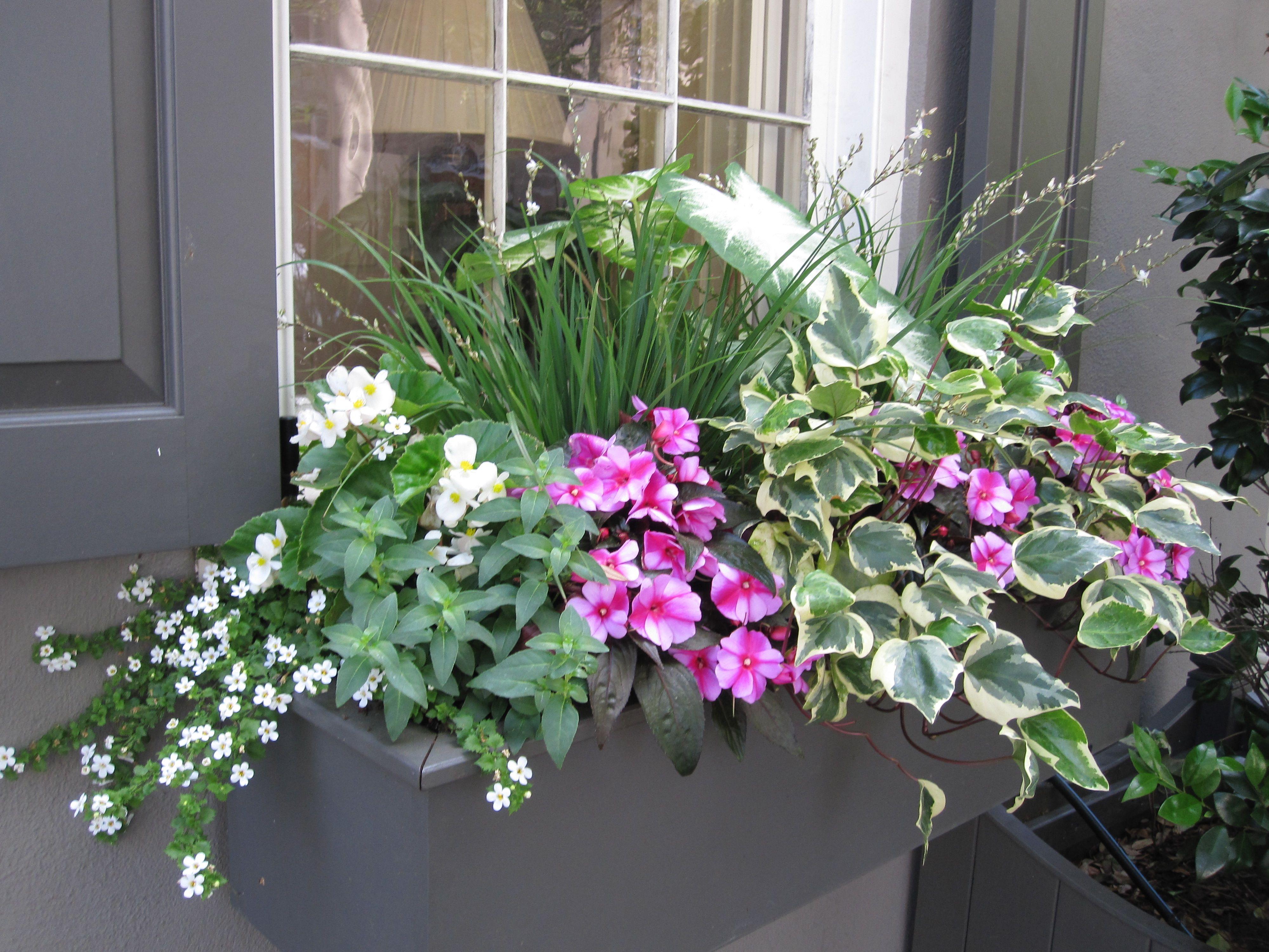 nice window container balkonkasten fr hjahr sommer pinterest. Black Bedroom Furniture Sets. Home Design Ideas