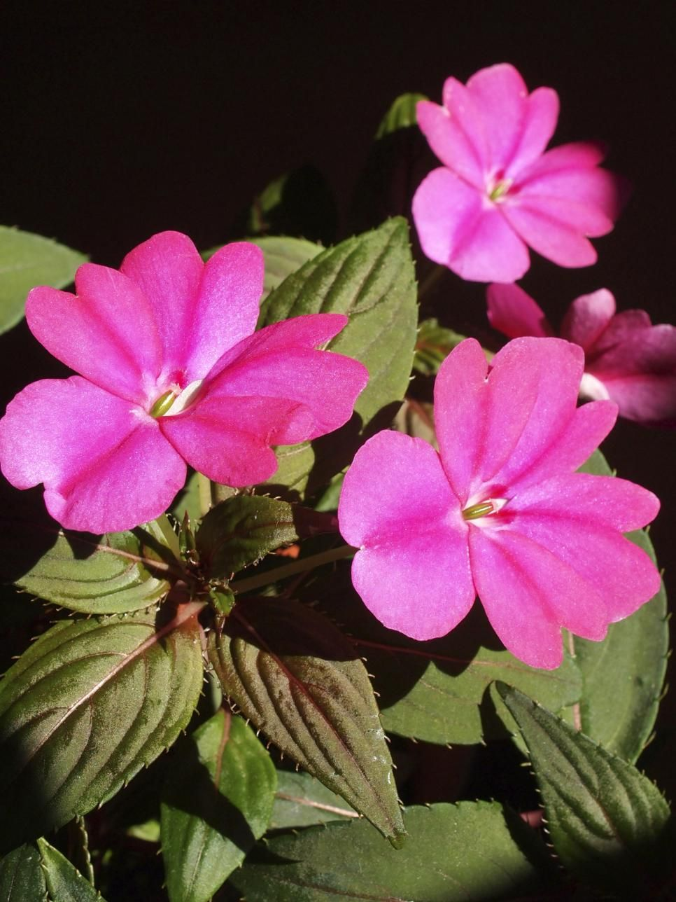 The easiest annuals to plant for color all summer long plants flowers izmirmasajfo Image collections