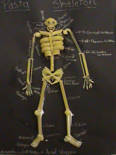 pasta skeleton | science: human body / biology | pinterest, Skeleton