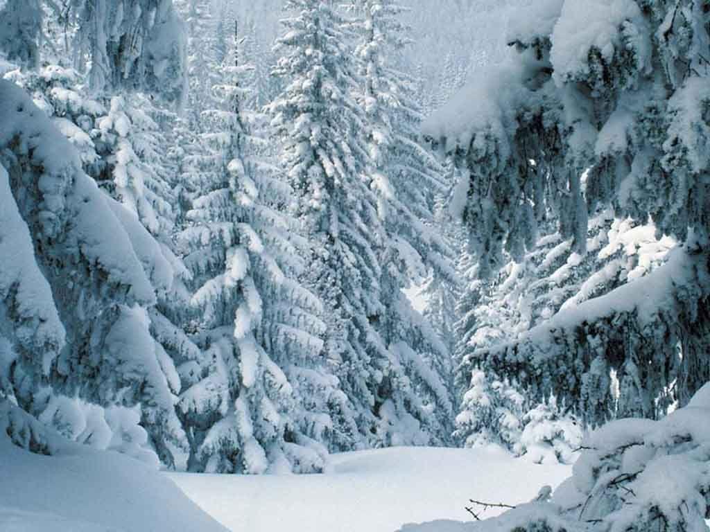 Blanket Winter Scenery Scene Wallpaper Winter Snow Wallpaper