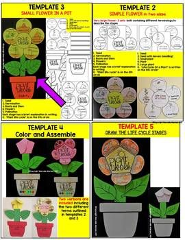Life Cycle Of A Plant Art Project