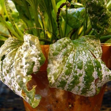 11 Signs Of An Unhappy Houseplant And How You Can Help House Plants Plant Diseases Plant Problems