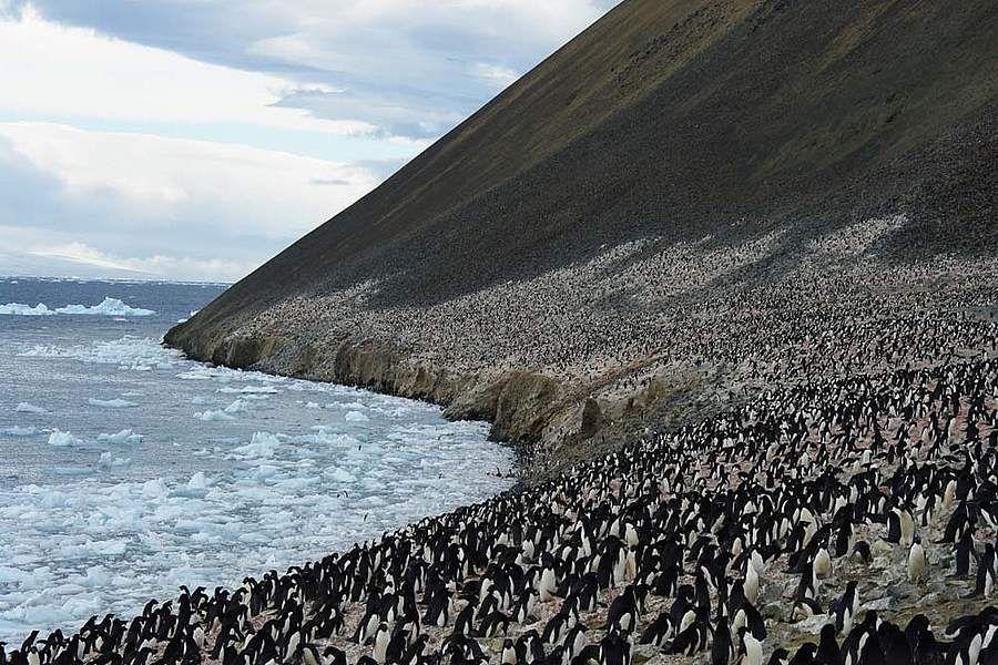 terremoto en somerset island, terremoto en penguin island Bc97998f6325ab20c622285db3ecb49d