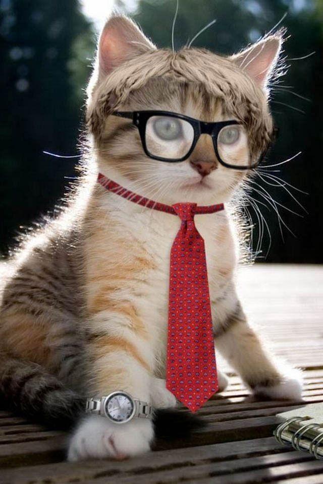 Bonjour Chat Avec Cravate Et Lunettes Imagesia Com Ena