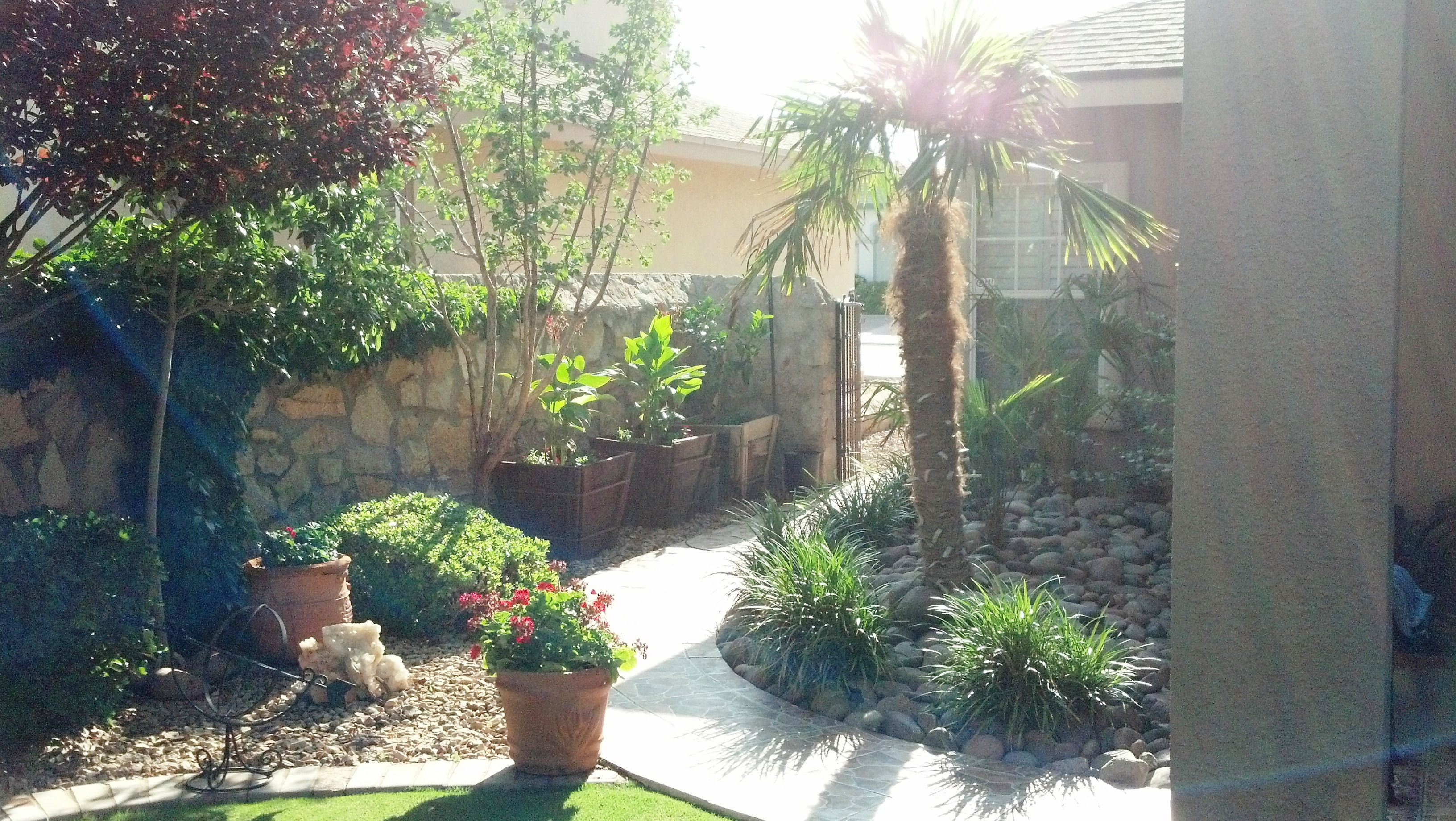 Windmill Palm Andscaping El Paso Tx By Chavez Construction 16 Jpg