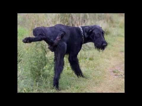 Como Hacer Que Los Perros Callejeros No Orinen Tu Casa Por Angypedia Repelente Para Perros Orina De Perro Perros