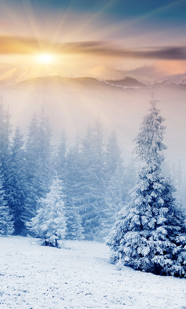 Photo of NA02D, # NA02D #Winter picture background