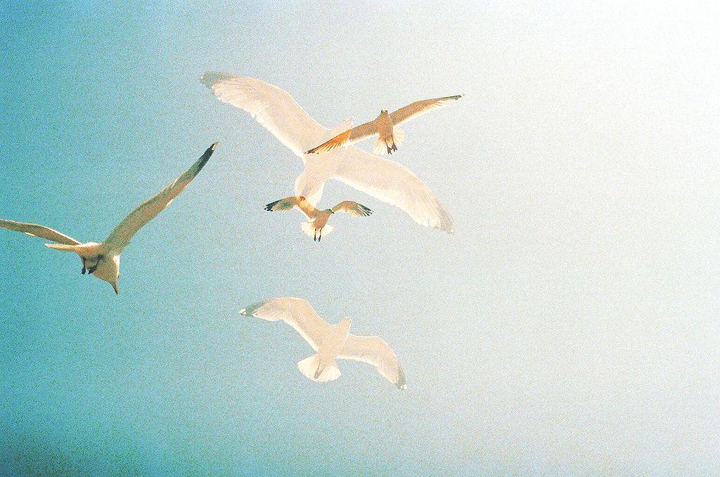www.louisastickelbruck.com www.facebook.com/louisastickelbruck