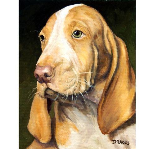 Bracco Italiano Dog Art 8x10 Print From Original By Dottie Dracos