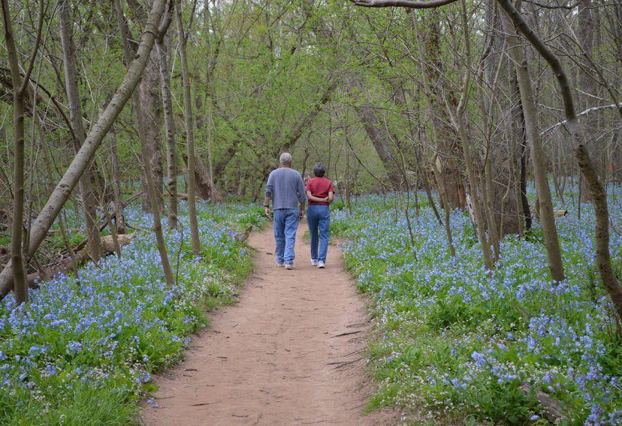 Take Virginia\'s Scenic Secret Garden Hike, The Bluebell Trail ...