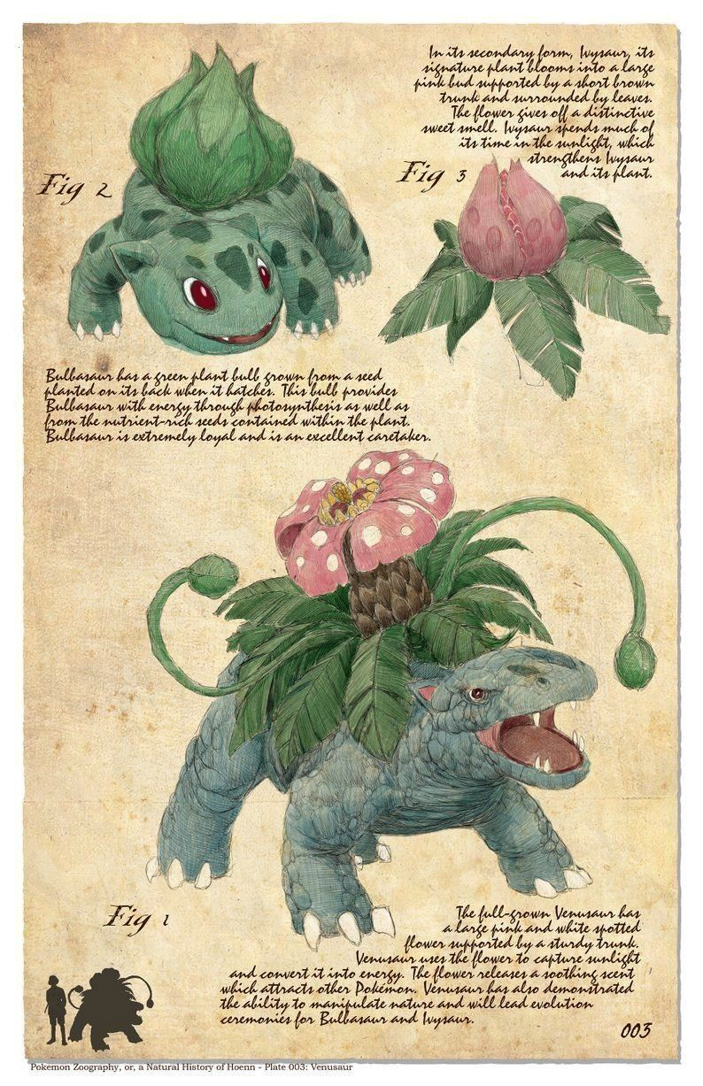 Natural History of Pokemon by Bogelbearart A Natural History of Pokemon by Bogelbearart  Wikihowillustrations  Koikun eremika  えれみか wallpapers  540 x 960  for anons...