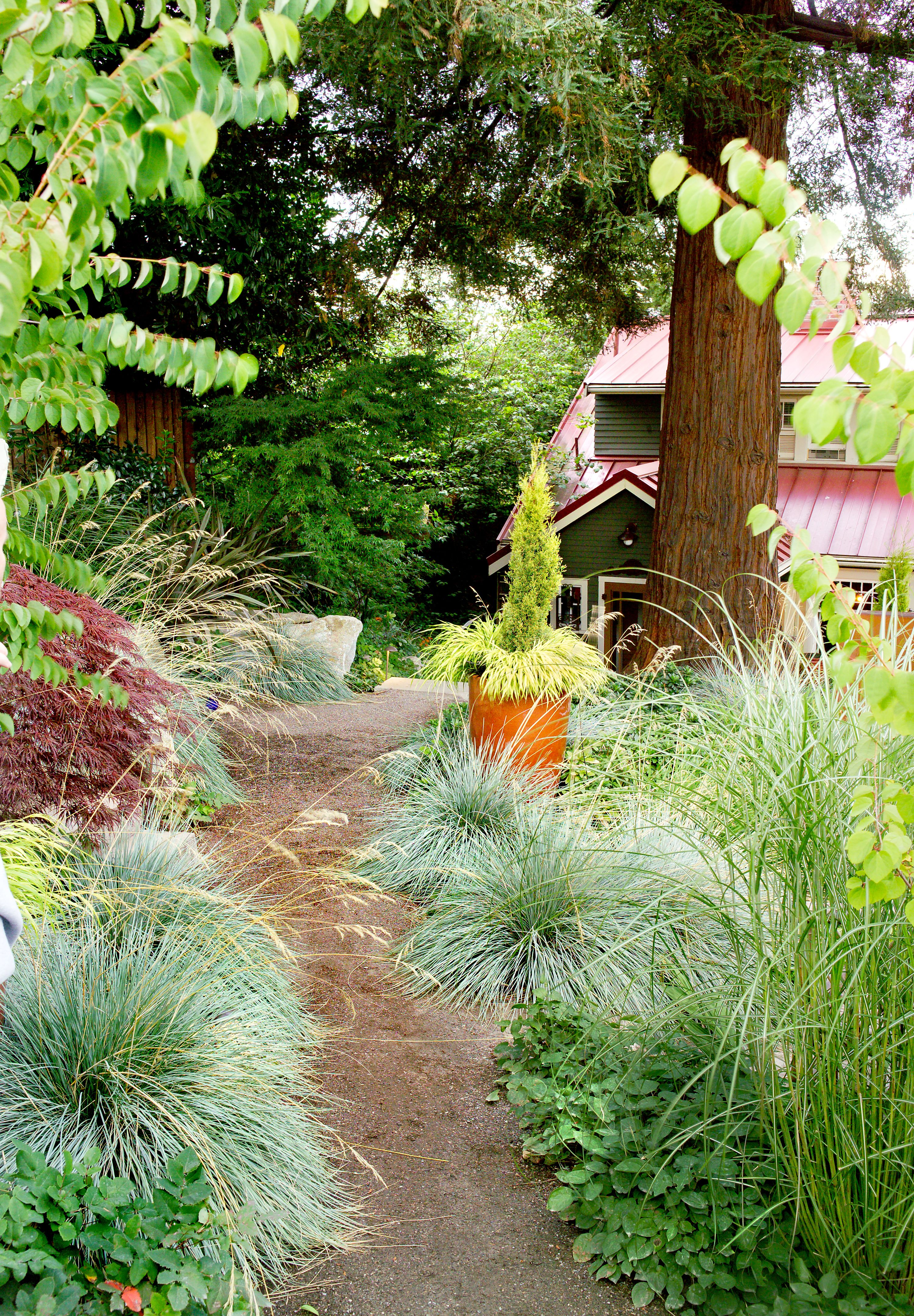Ornamental Grass Is A Low Maintenance Drought Resistant Plant Wonder Drought Resistant Plants Front House Landscaping Ornamental Grasses