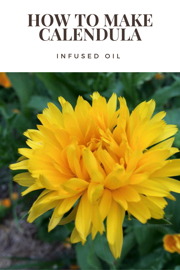 How to Make CalendulaInfused Oil Natural Health