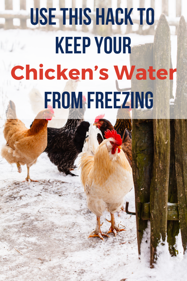 Use This Insanely Foolproof Hack To Keep Your Chicken's ...