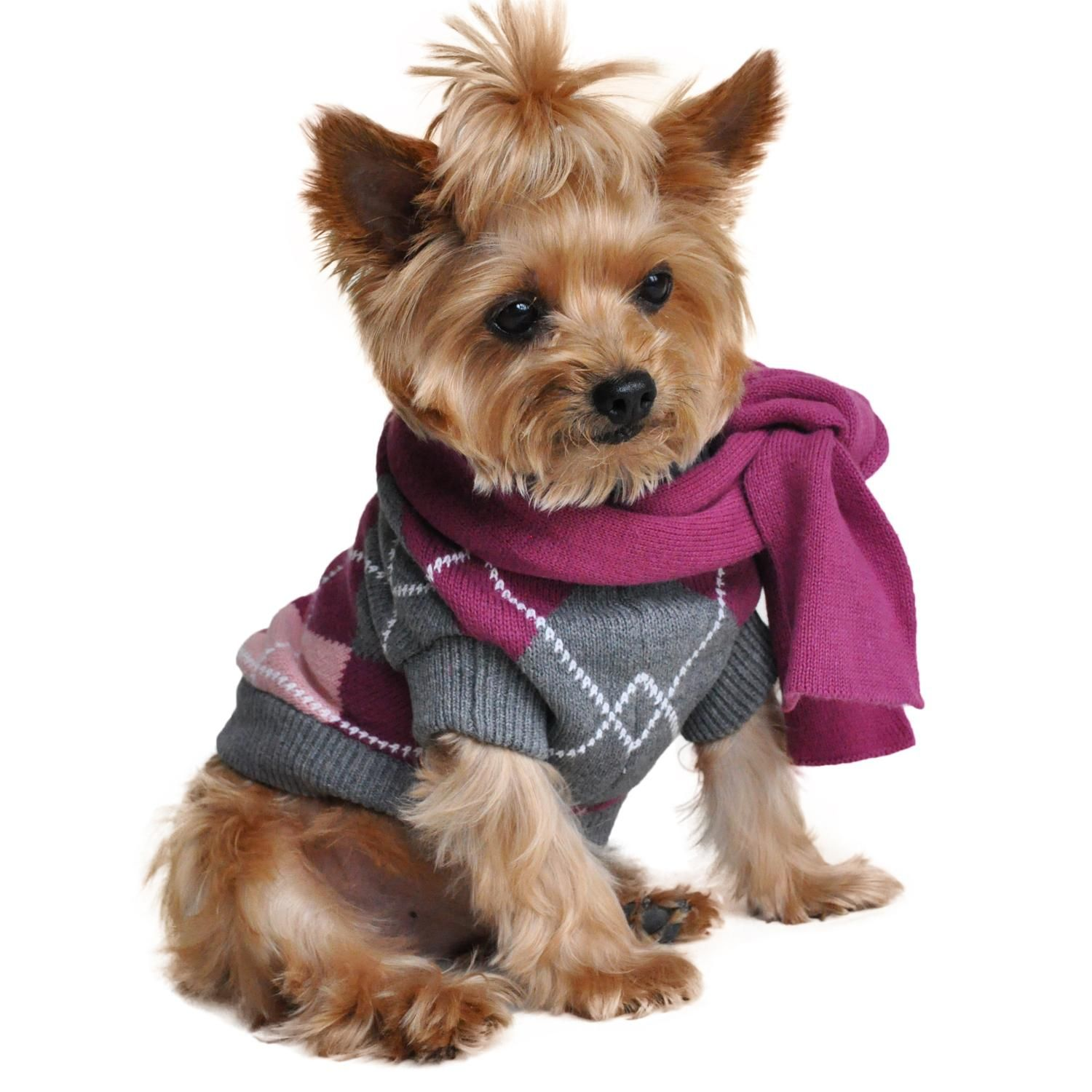 Our Official Argyle Purple Dog Sweater With Scarf By Doggie Design Is The Perfect Product For Almost Any Pet At Cute Dog Clothes Dog Clothes Dog Clothes Female