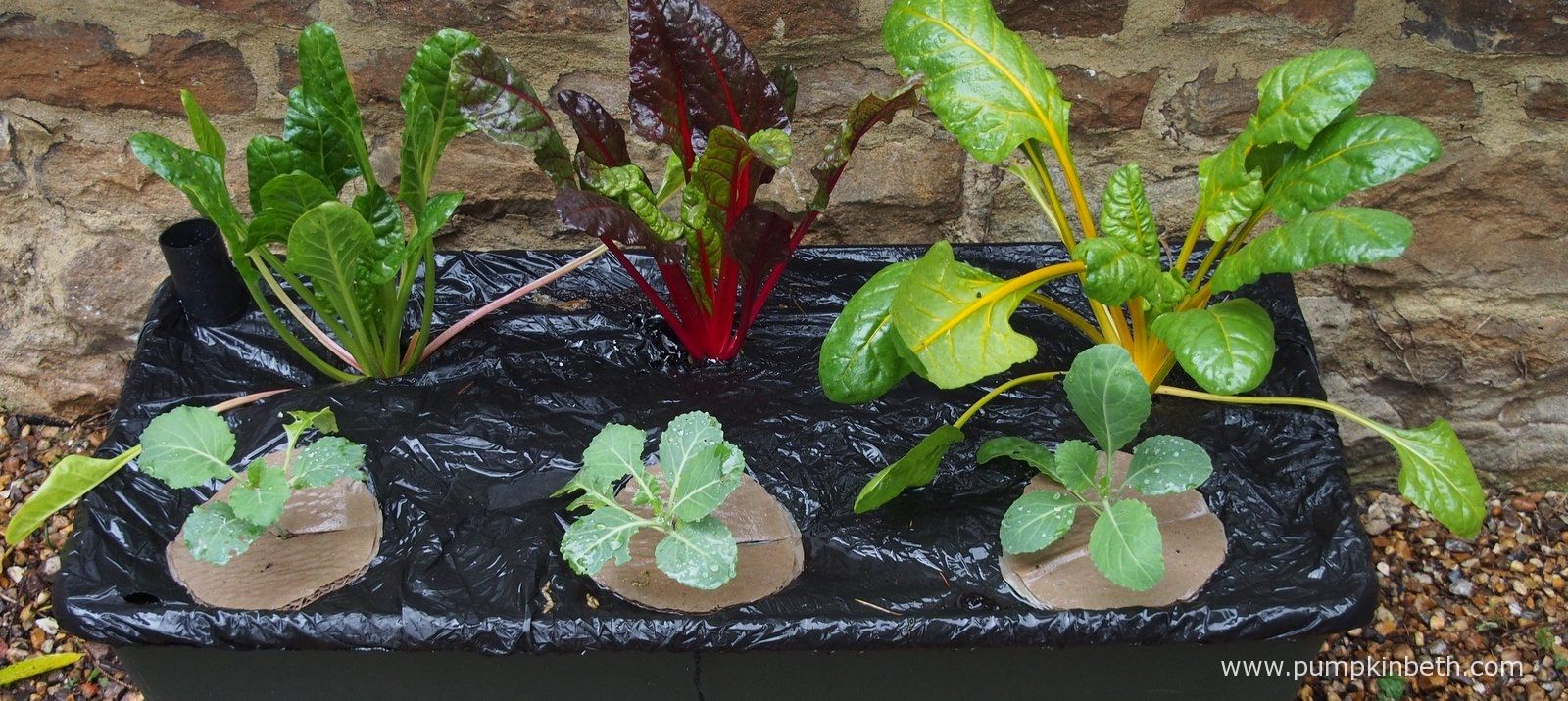 EarthBox Review Organic gardening catalogue, Earthbox
