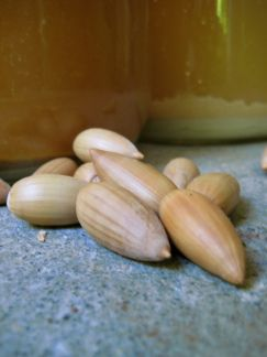 using acorns as a mordant