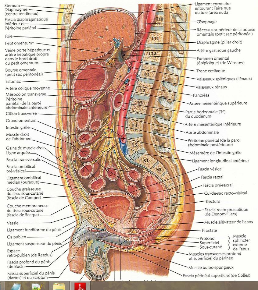 Female Neck Anatomy Anatomy Of Human Neck Anatomy Human Body ...