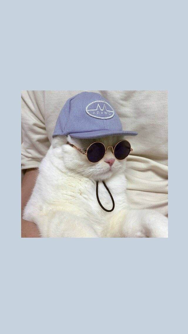 Photo of @ _mintrapitouwu🌙 – gatos – #cats #mintrapitouwu