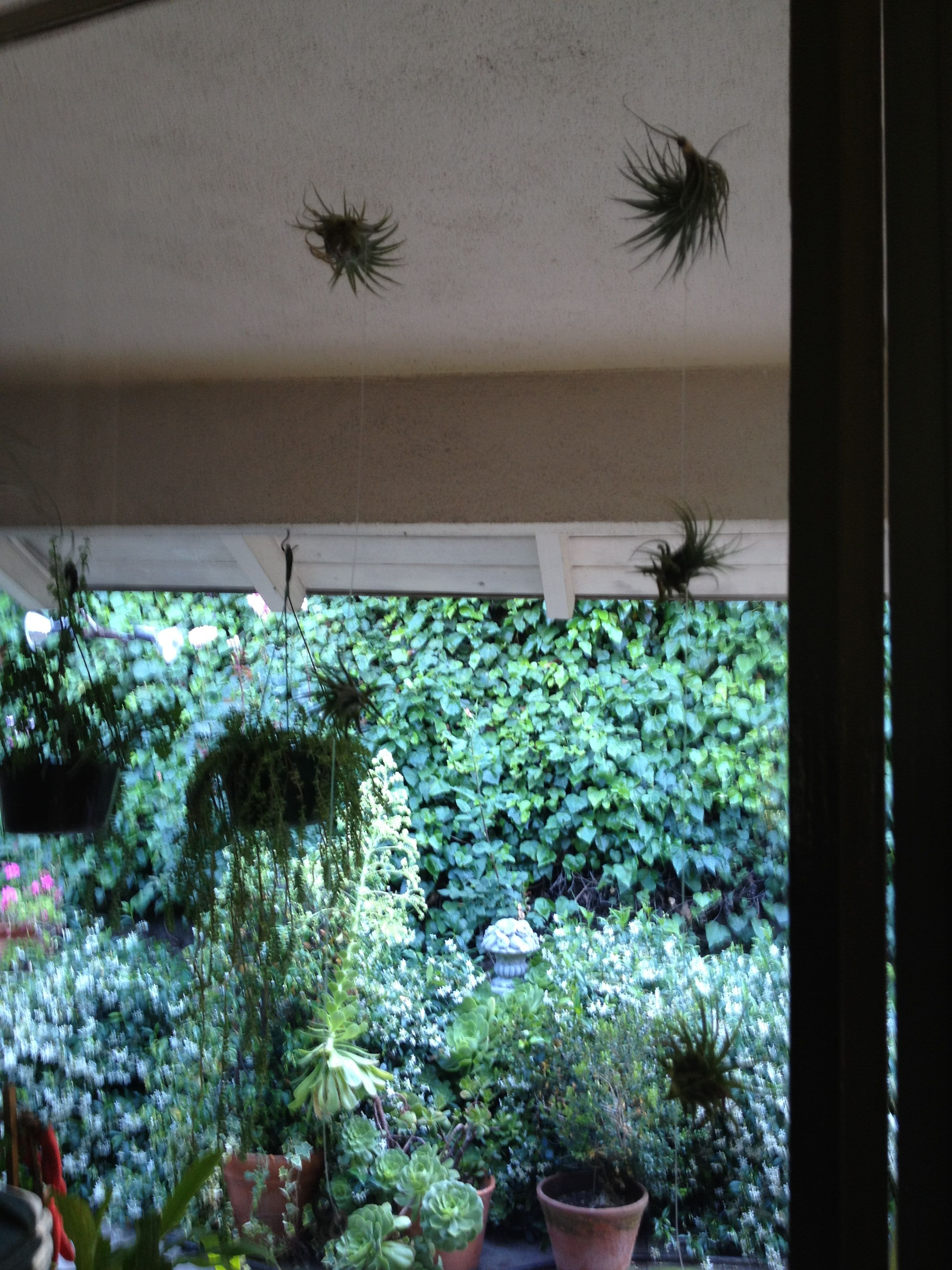 Coming together think i may add more air plants to our