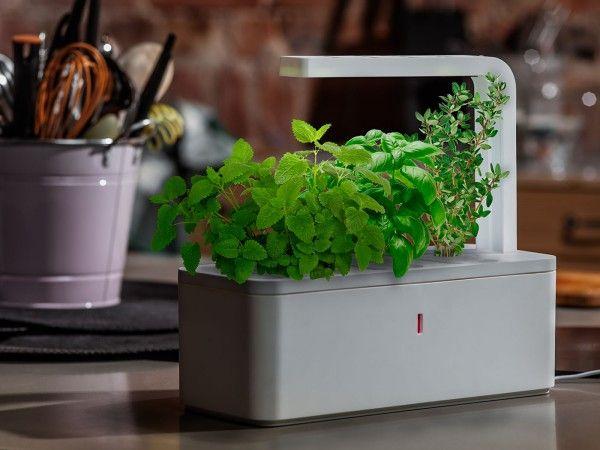 Click Grow Le Mini Jardin Potager D Interieur 2 0 Jardin D Herbes Culture D Herbes Herbes Aromatiques
