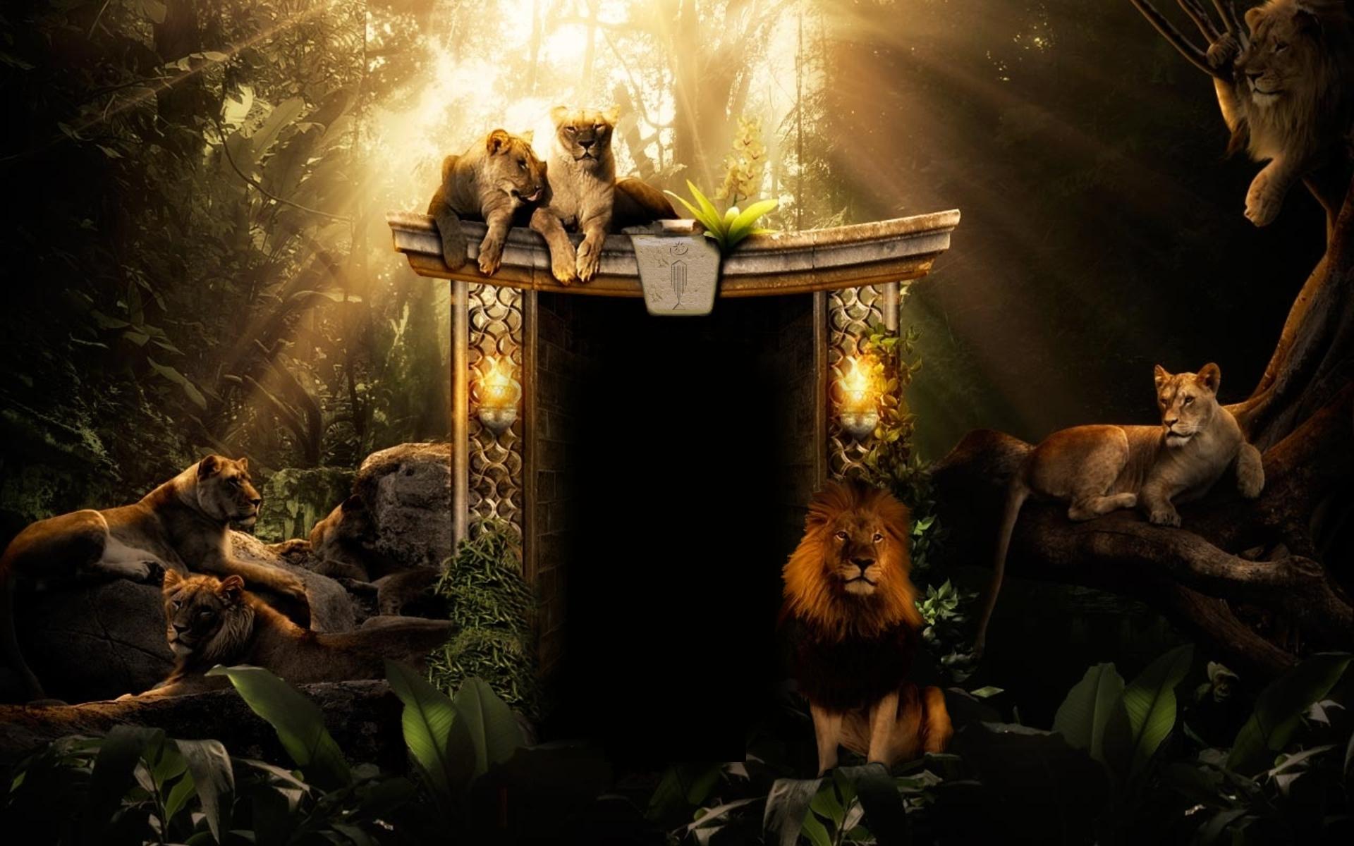 The Hidden Doorway - ayahuasca retreats (Amsterdam and Ecuador)