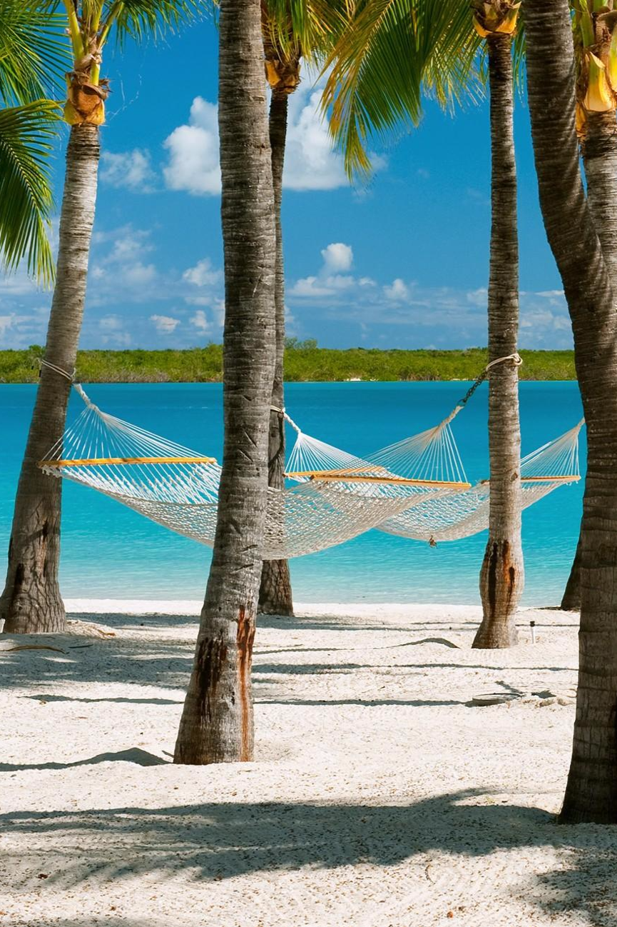 A hammock strung between two trees on the beach: the ...