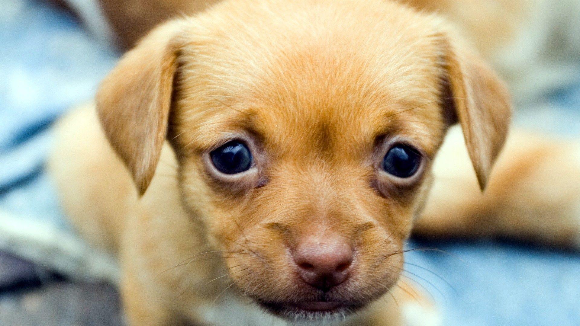 Sweetest little puppy eyes ever cutest dogs naturessleep
